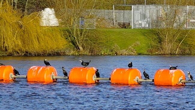 Birds_on_floats_cropped.jpg