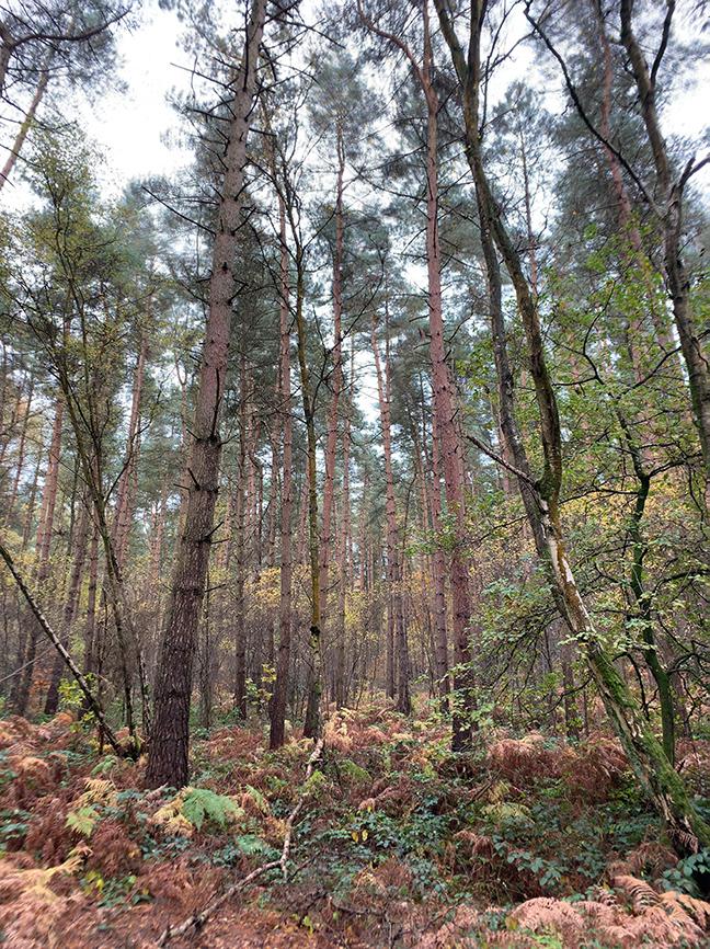 Forest original photo.jpg
