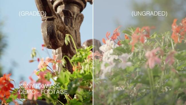 Sony_PXW-FS5_Demo_Footage_Long.Still002.jpg