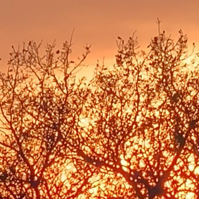 Sunset zoom crop.jpg