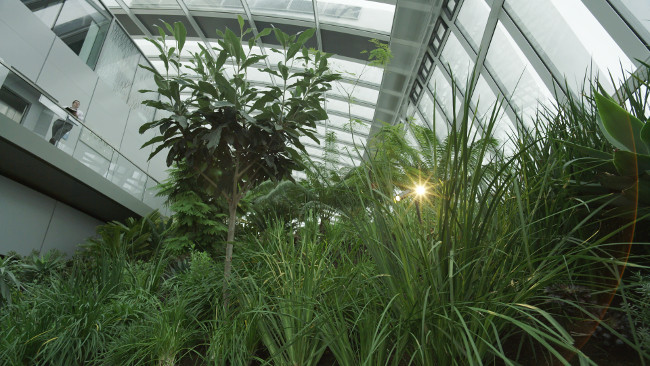 Veydra_12mm_on_JVC_GY-LS300_-_foliage_and_flare.png.jpg