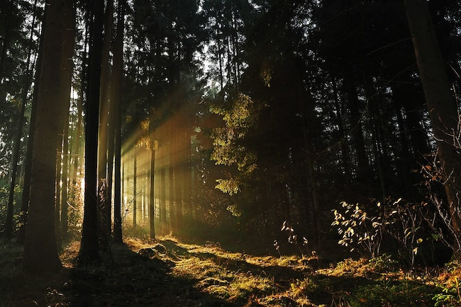 Morning light in a forest.