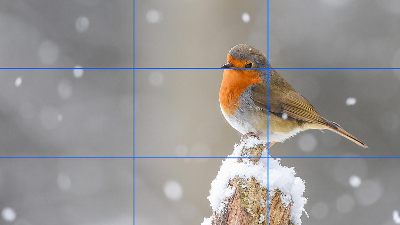 Try to observe standard aspect ratios and composition thought when cropping an image. Image: